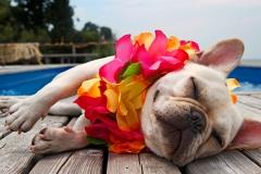 vacation_dog